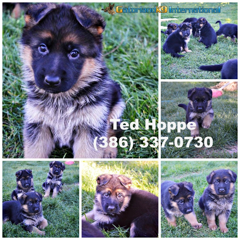 puppies collage ted 800x800